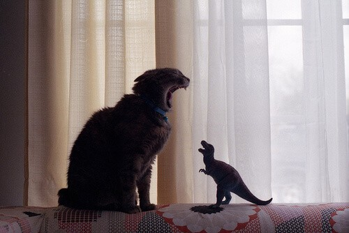 cat-dino-scream